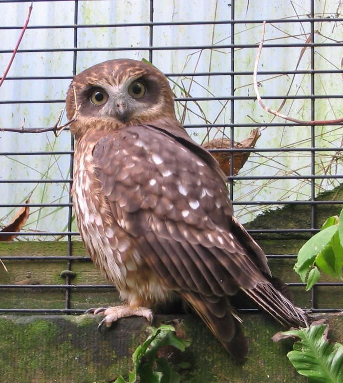 Owls At Rodbaston Animal Zone