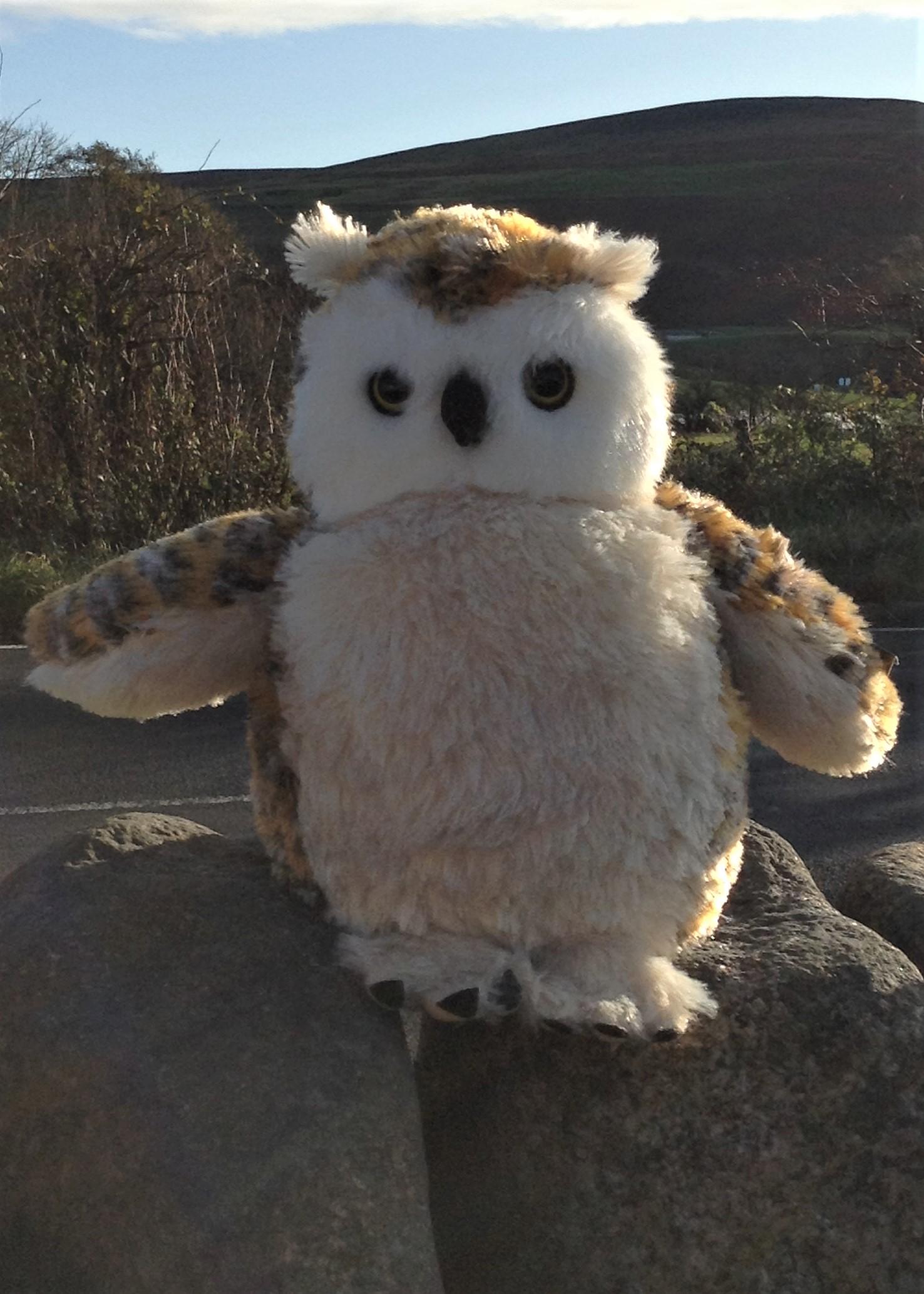 Large Fluffy Owl