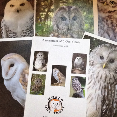 Assortment of 5 Owl Cards