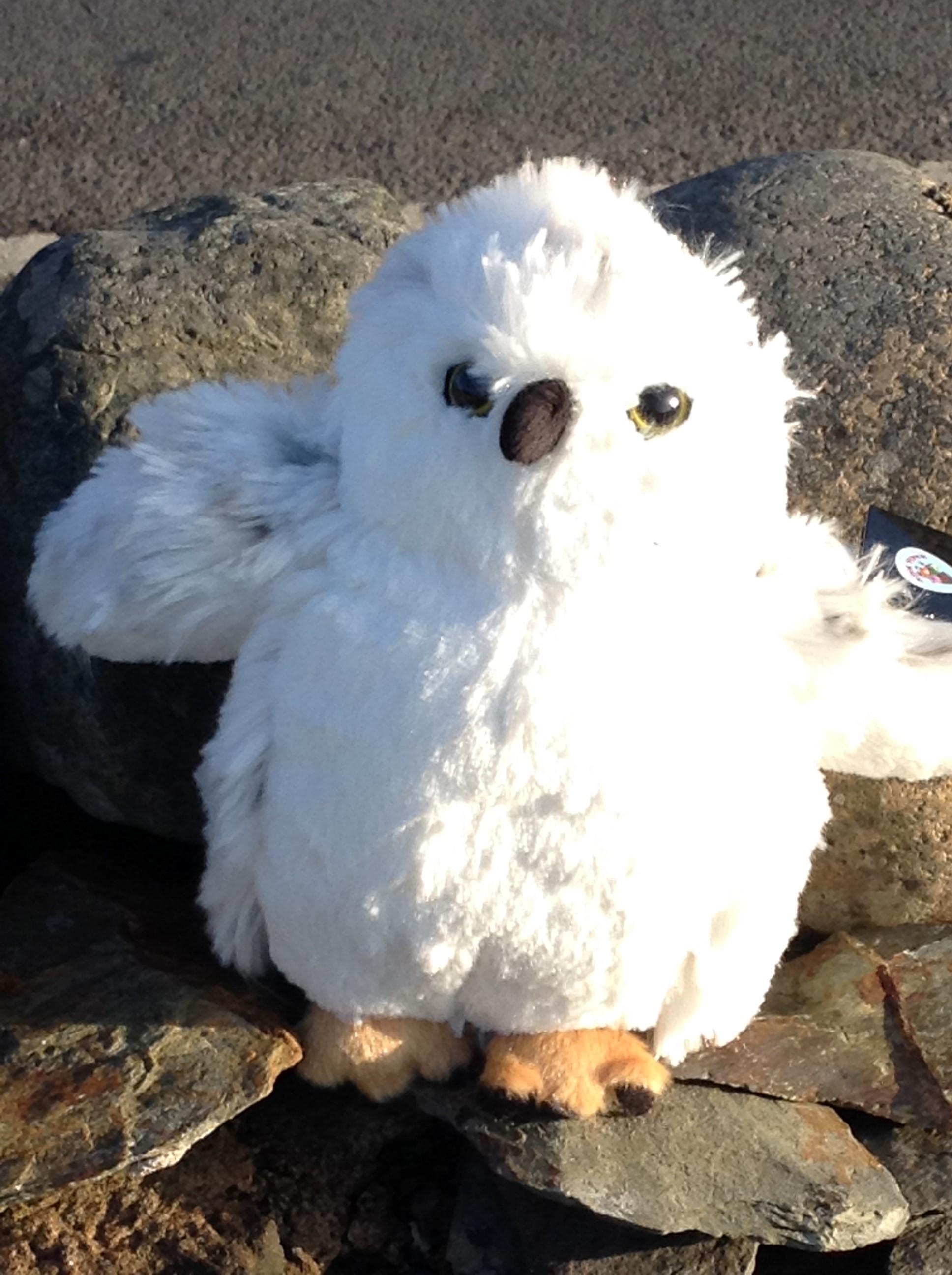 Fluffy Snowy Owl